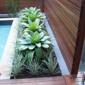 Planting and poolscapes